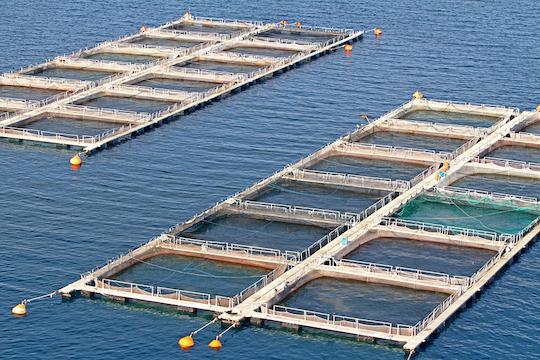 ocean-fish-farming